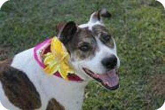 Hound (Unknown Type) Mix Dog for adoption in Jesup, Georgia - Bella