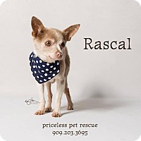 Adopt A Pet :: Rascal - in Foster Care - Chino Hills, CA