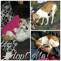 Adopt A Pet :: Faith - Acushnet, MA