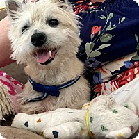 Adopt A Pet :: Hummer - Windermere, FL