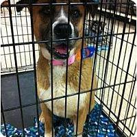 Adopt A Pet :: Sunny - Fowler, CA