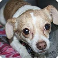 Adopt A Pet :: Dolly - Canoga Park, CA