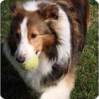 Adopt A Pet :: Pete - Indiana, IN