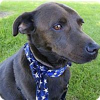 Adopt A Pet :: Buddy companion - Sacramento, CA