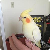 Adopt A Pet :: Betty - Lenexa, KS