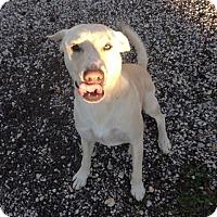 Adopt A Pet :: Buddy - Pointblank, TX