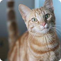 Adopt A Pet :: Angus - Canoga Park, CA