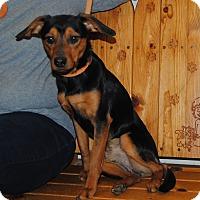 Adopt A Pet :: Buddy - Parsons, KS