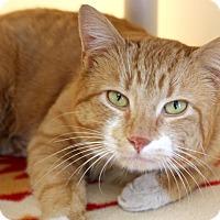 Adopt A Pet :: Carlton - Harrisonburg, VA