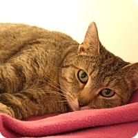 Adopt A Pet :: Mewlan - Harrisonburg, VA