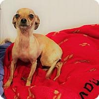 Adopt A Pet :: Bella ***COURTESY POST*** - Dillsburg, PA