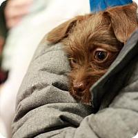Adopt A Pet :: Caleb - Morganville, NJ