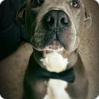 Adopt A Pet :: Gordy - Tampa, FL