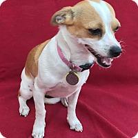 Adopt A Pet :: Cami - Garland, TX