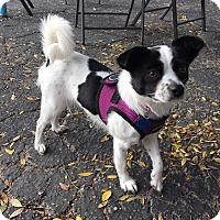Adopt A Pet :: Eva - Fullerton, CA
