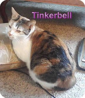 Calico Cat for adoption in Olmsted Falls, Ohio - Tinkerbell-COURTESY POST