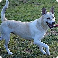 Adopt A Pet :: Indiana Bones (Indie) - Burleson, TX