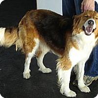 Adopt A Pet :: COLLIN - ROCKMART, GA