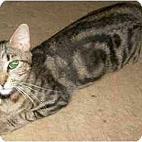 Adopt A Pet :: Bella - Catasauqua, PA