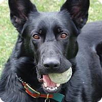 Adopt A Pet :: Daphne - Wayland, MA
