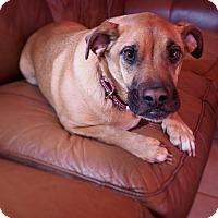 Adopt A Pet :: Shelby - Alpharetta, GA