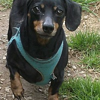 Adopt A Pet :: Heidi - Georgetown, KY