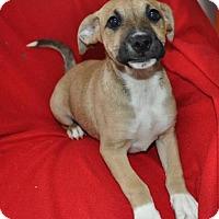 Adopt A Pet :: Andy - Erwin, TN