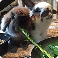 Adopt A Pet :: Pudding and Teddy - Moneta, VA