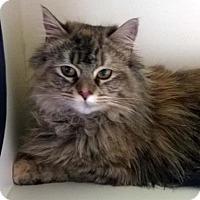Adopt A Pet :: MESHELLE - Terre Haute, IN