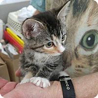Adopt A Pet :: YoYo - Dallas, TX
