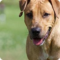 Adopt A Pet :: Booker - Columbus, OH