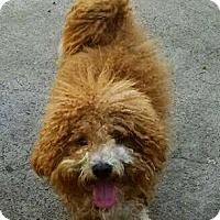 Adopt A Pet :: Scotty - Monrovia, CA
