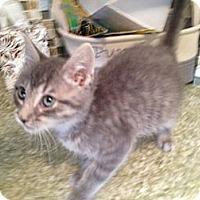 Adopt A Pet :: Spencer - East Hanover, NJ