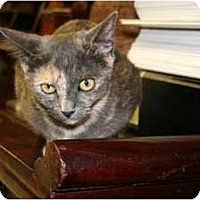 Adopt A Pet :: Leah - Naples, FL