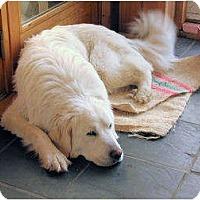 Adopt A Pet :: Miss Bea - Minneapolis, MN
