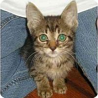 Adopt A Pet :: Fendi - Fort Lauderdale, FL