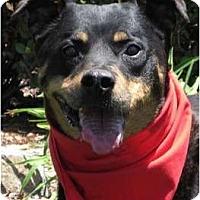 Adopt A Pet :: Roxy - Encinitas, CA