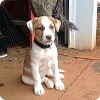 Adopt A Pet :: Merrill - hartford, CT