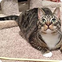 Adopt A Pet :: Harley - Mount Clemens, MI