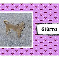 Adopt A Pet :: Sierra - Graford, TX