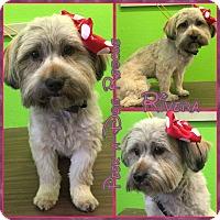 Adopt A Pet :: Rivera - South Gate, CA