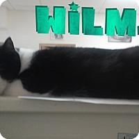 Adopt A Pet :: Wilma - Trevose, PA