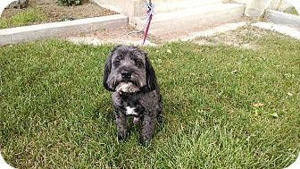 Cocker Spaniel/Lhasa Apso Mix Dog for adoption in E. Wenatchee, Washington - Reggie
