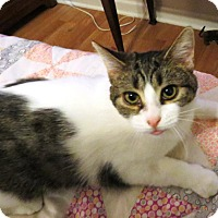Adopt A Pet :: Holly - Rochester Hills, MI