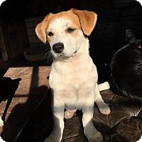 Adopt A Pet :: 'BB' - Agoura Hills, CA