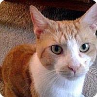 Adopt A Pet :: Cody - Alexandria, VA