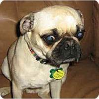 Adopt A Pet :: Mary Poppins - Scottsdale, AZ