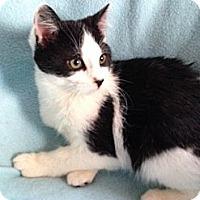 Adopt A Pet :: Duke - Simpsonville, SC