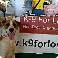 Adopt A Pet :: Patches - Miami, FL