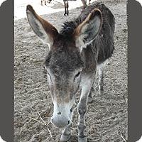Adopt A Pet :: Magnolia - Farmersville, TX